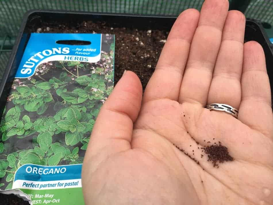 oregano seeds are so tiny