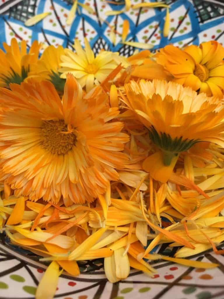 Yellow and orange daisy like flowers of calendula in a blue bowl