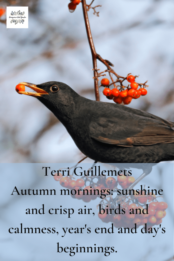 Terri Guillemets Autumn mornings: sunshine and crisp air, birds and calmness, year's end and day's beginnings.