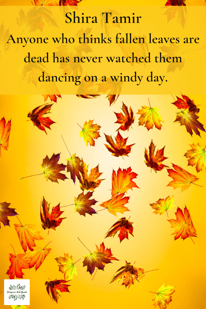 Shira Tamir Anyone who thinks fallen leaves are dead has never watched them dancing on a windy day.