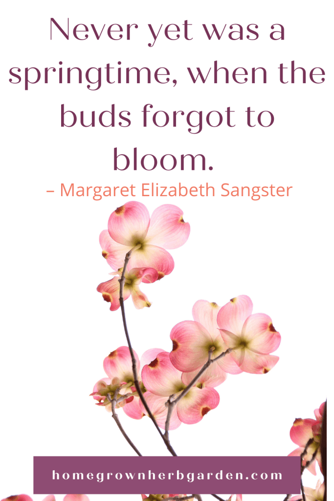 Never yet was a springtime, when the buds forgot to bloom. -Margaret Elizabeth Sangster