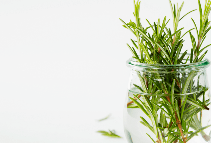 storing fresh herbs in your kitchen