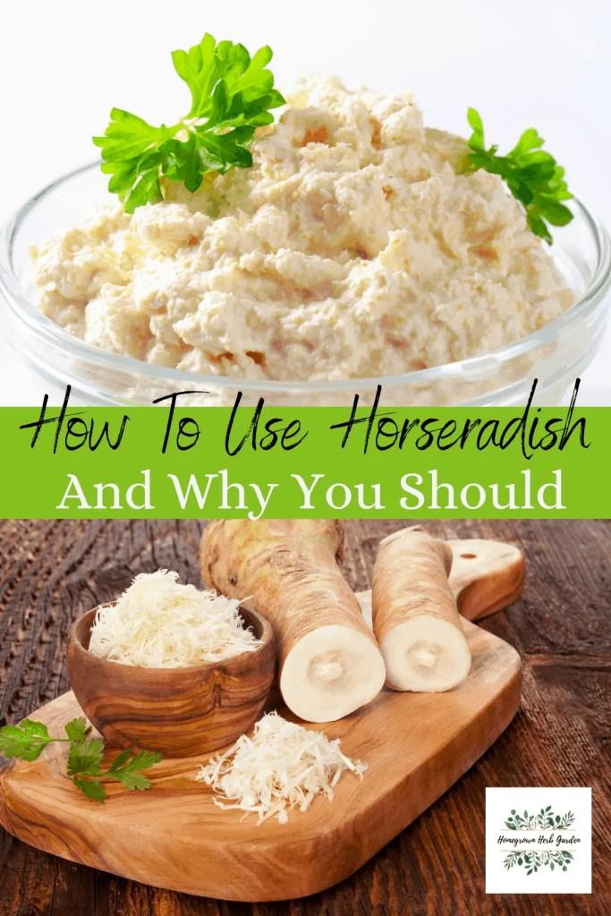 uses for fresh horseradish