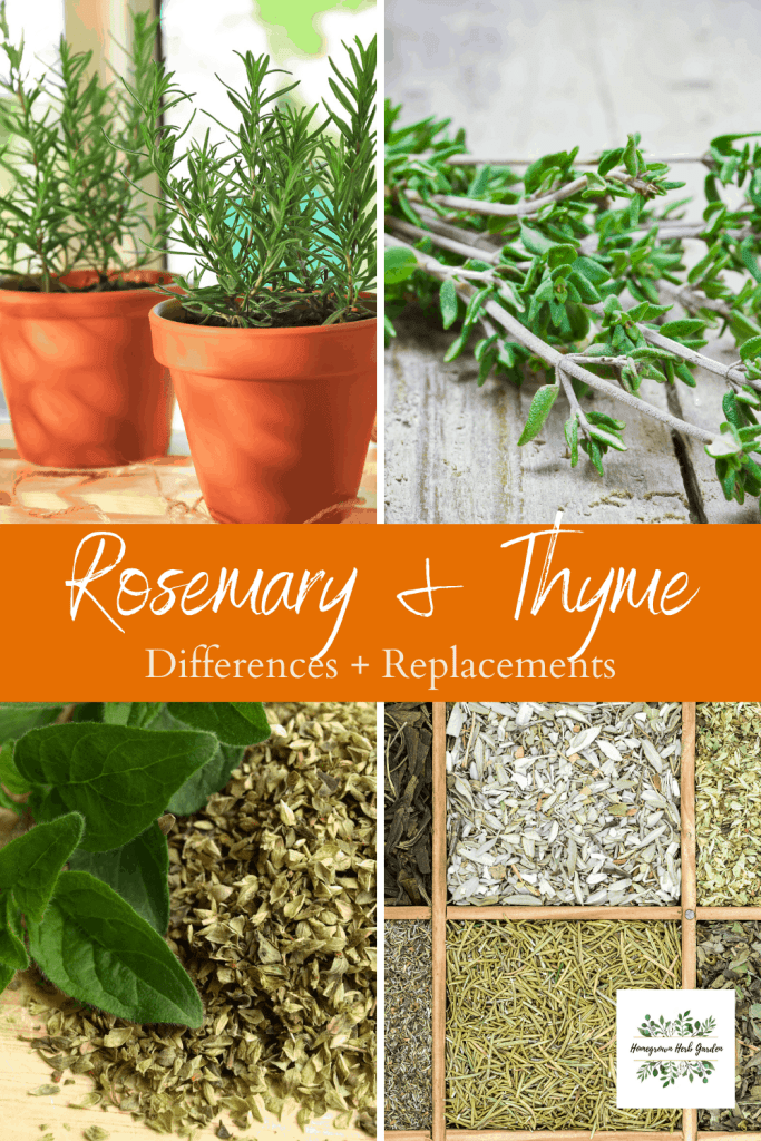 rosemary and thyme replacements
