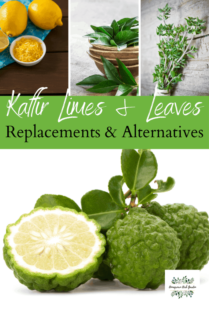 kaffir lime makrut replacements and substitutes