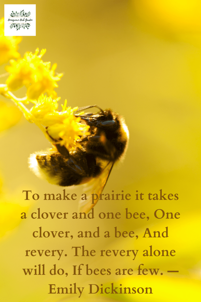 To make a prairie it takes a clover and one bee, One clover, and a bee, And revery. The revery alone will do, If bees are few. —Emily Dickinson