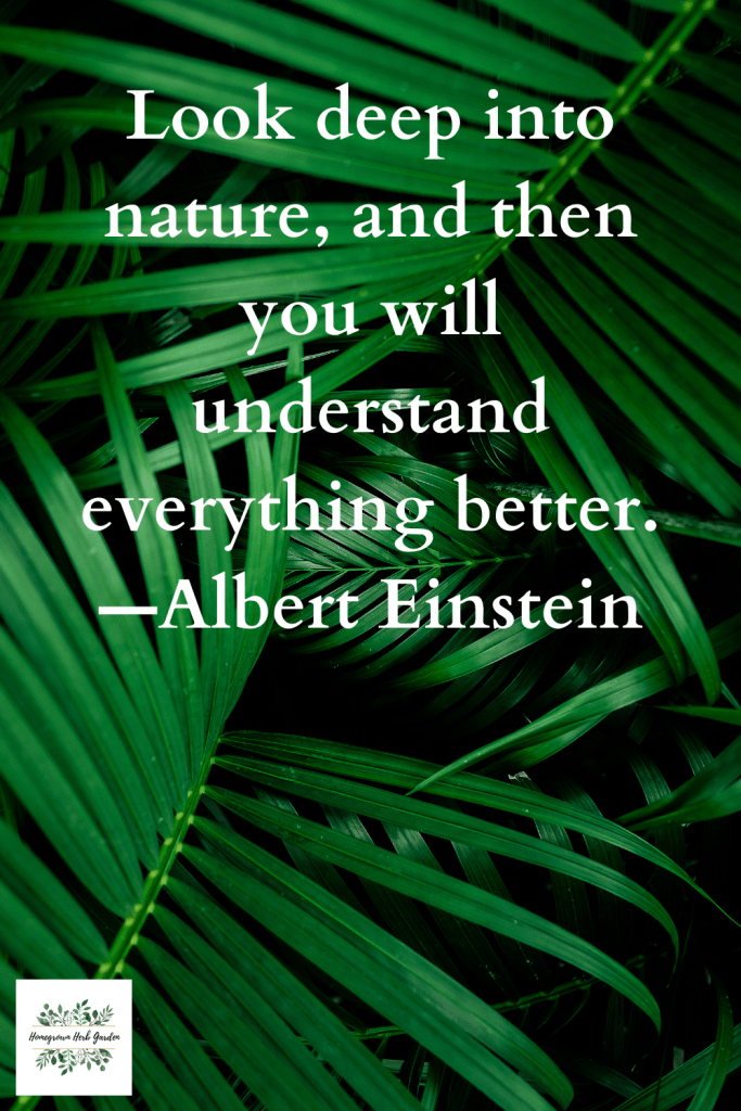 Look deep into nature, and then you will understand everything better. —Albert Einstein