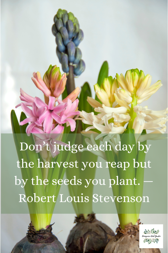 Don't judge each day by the harvest you reap but by the seeds you plant. —Robert Louis Stevenson