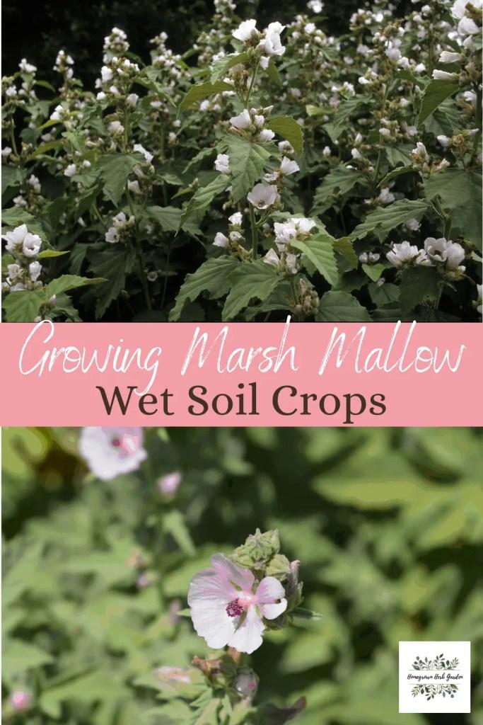 wet soil solution planting