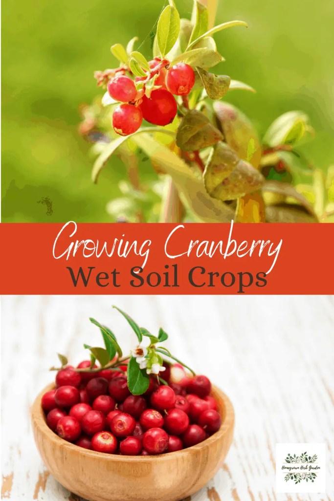 cranberry wet soil loving crop