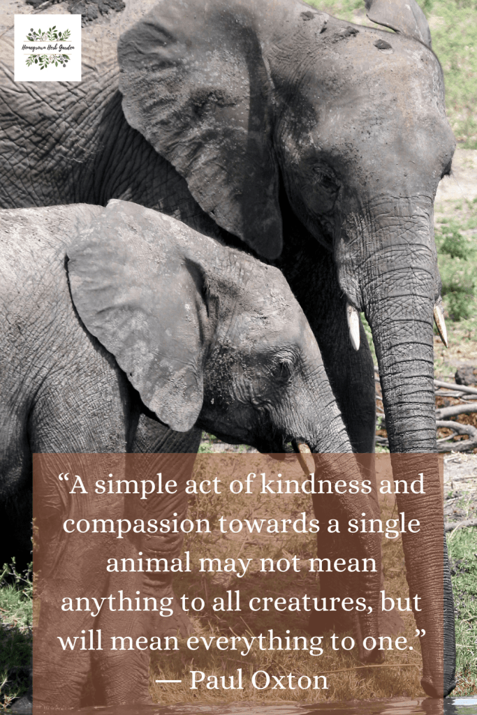 """A simple act of kindness and compassion towards a single animal may not mean anything to all creatures, but will mean everything to one."" ― Paul Oxton"