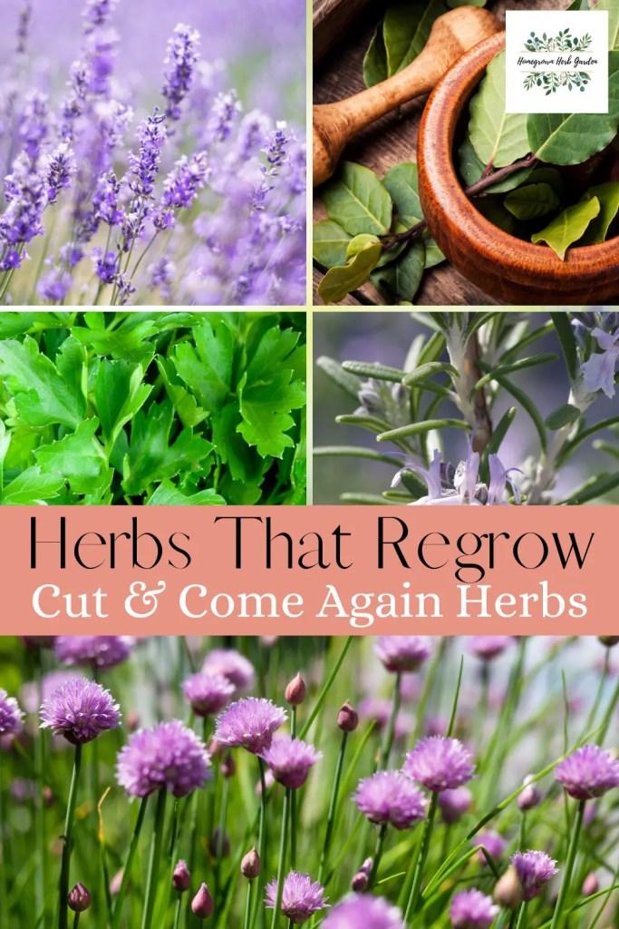 cut and come again herbs