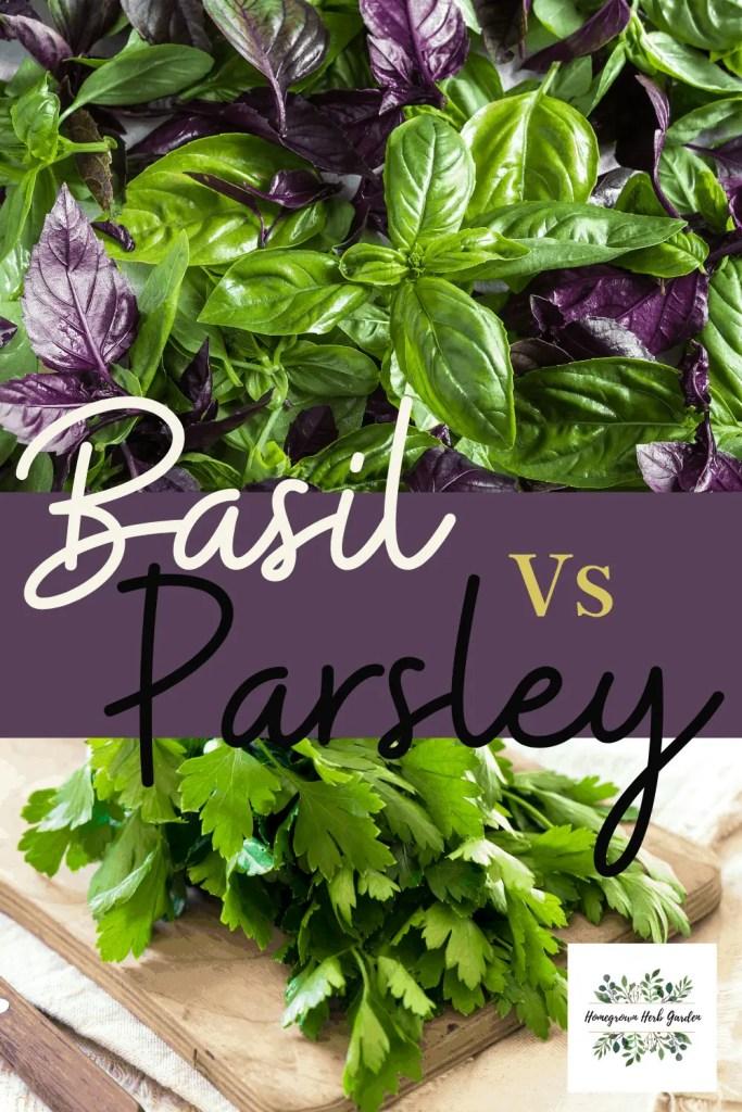 Basil Vs Parsley