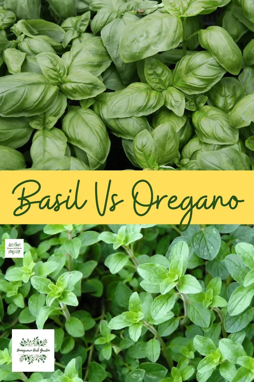 Basil vs oregano