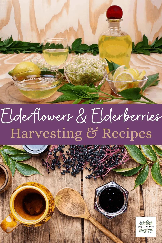 Elderflowers vs