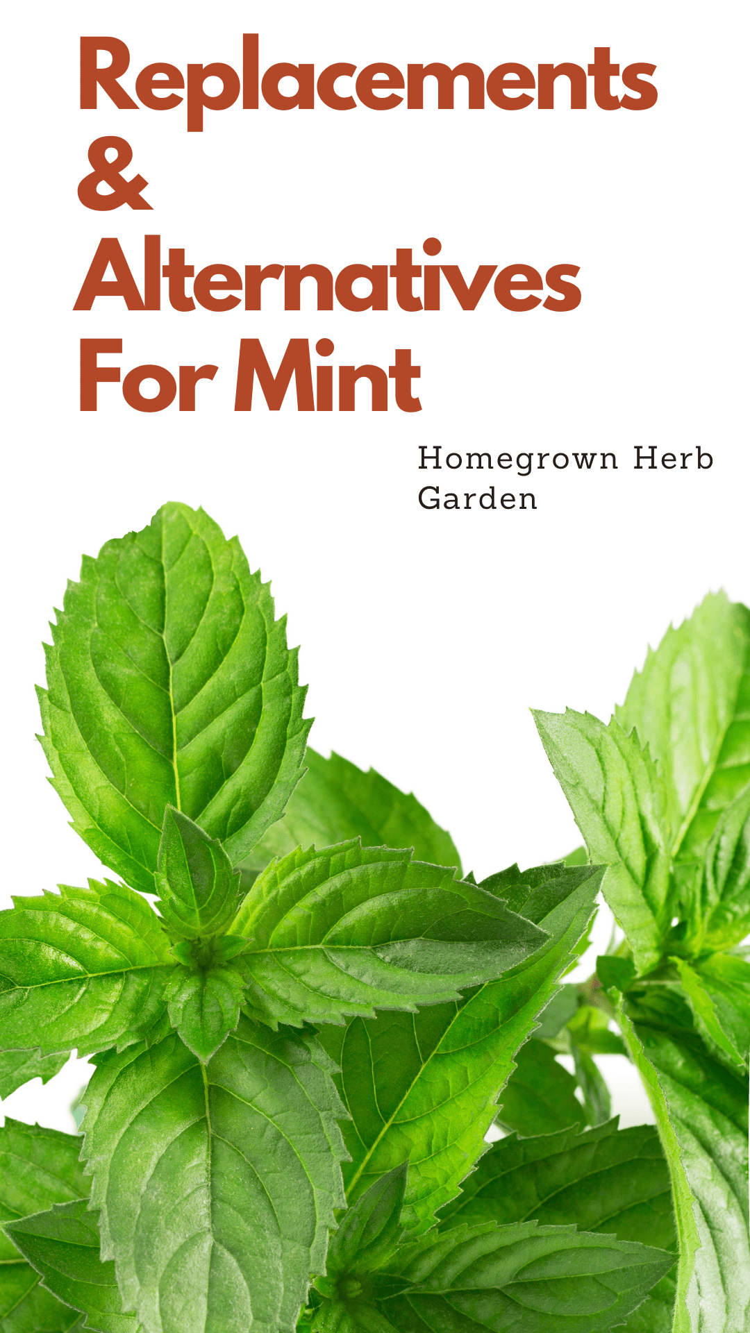 replacements for mint
