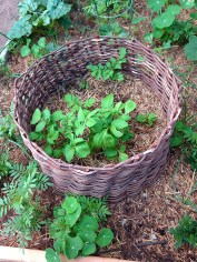 Linda and Jim Archibald's potato basket