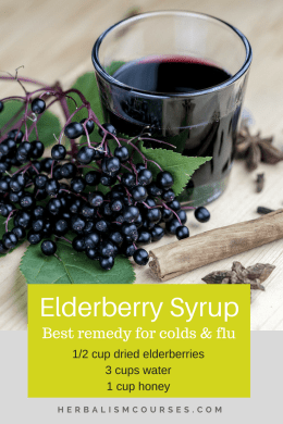 Elderberry syrup in the most effective herbal remedy for flu and cough. This DIY recipe has other benfits too. #flu #cough #elderberry #syrup #herbalism #herbalremedies #herbalismcourses