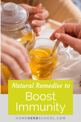 Natural remedies to boost immunity are an important part of herbalism. This article focuses on what you can do to help prevent getting sick this cold and flu season. #Herbalism #HerbalMedicine #ImmuneBoosting