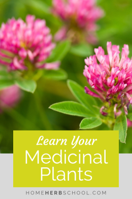 Learn the top flowers used in herbalism and see why herbalists love red clover, St. Johns wort, yarrow, rose and elderflower. #Herbalism #HerbalMedicine #HerbalismCourse