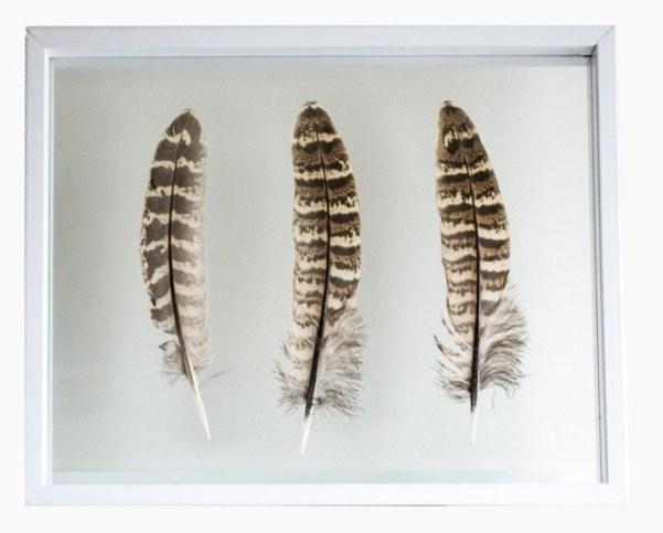 fazant-vogel-veer-female-black1.1-800x700