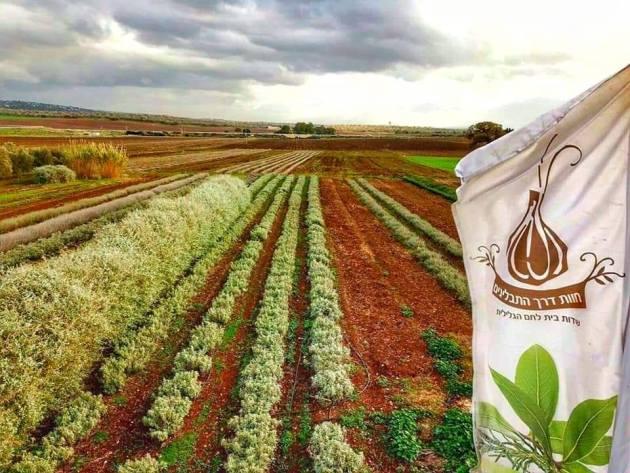 חוות דרך התבלינים בית לחם הגלילית