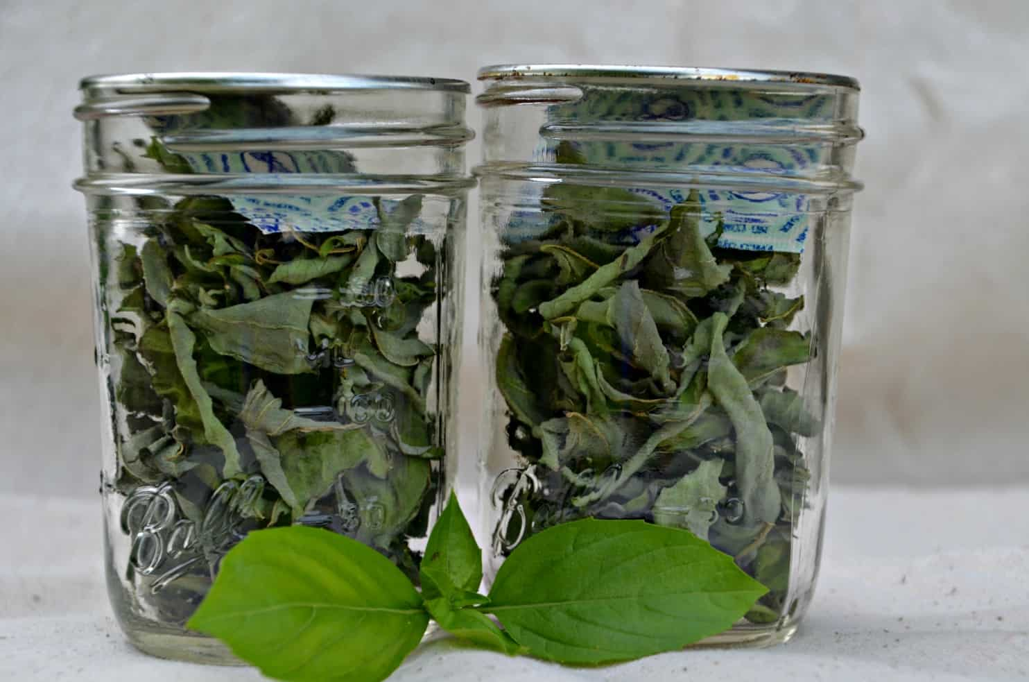 Drying fresh basil from your garden in a dehydrator- Home in the Finger Lakes
