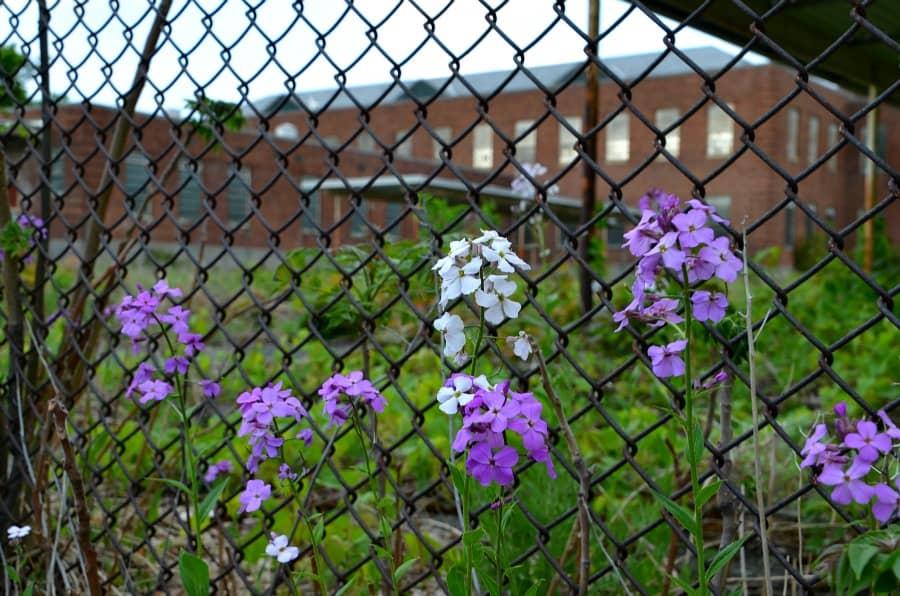 Newark Flowers