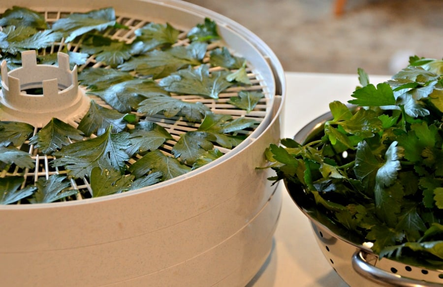 Drying Fresh Parsley in a Dehydrator