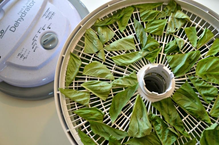Food Dehydrator filled with basil