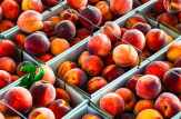 Produce Auction-Peaches