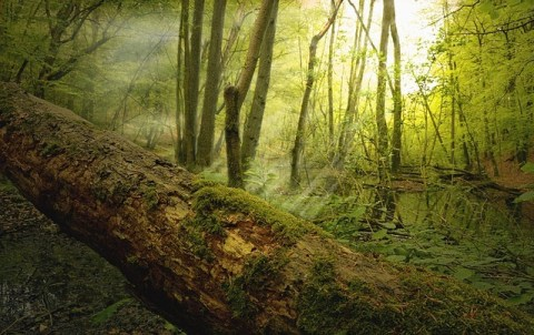 natur skov friluftsliv roadtrip vanlife