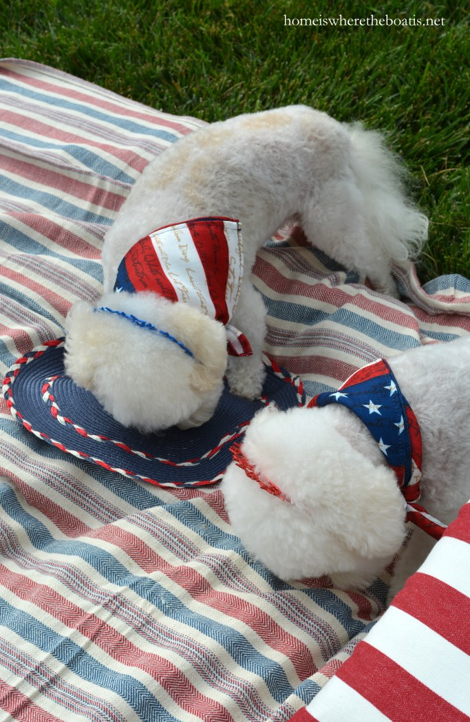 Chloe and Gracie enjoying Quick and Easy Frozen Dog Treats for Summer, aka Copycat Frosty Paws Recipe   ©homeiswheretheboatis.net #dogtreats #easy #summer #july4th #BichonFrise
