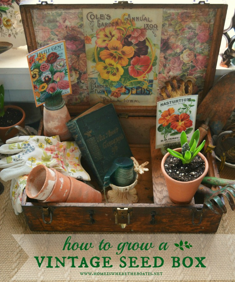 How to Grow a Vintage Seed Box