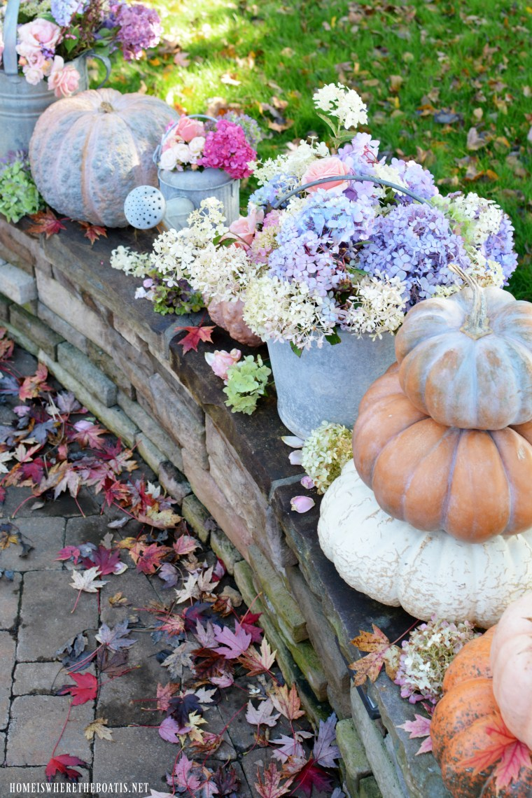 Galvanized bucket and watering cans with hydrangeas, roses and pumpkins | ©homeiswheretheboatis.net #pumpkins #fall #hydrangeas #roses
