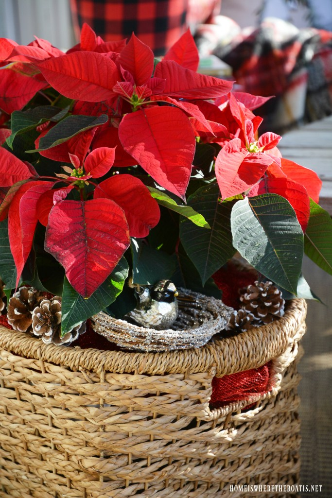 Christmas nesting on the porch with Poinsettias in basket with pinecones, bird ornament in nest | ©homeiswheretheboatis.net #Christmas #Porch