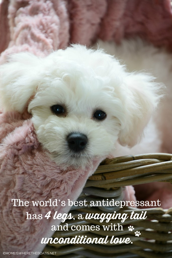 The world's best antidepressant has 4 legs, a wagging tail and comes with unconditional love | ©homeiswheretheboatis.net #dogs #bichonfrise #nationaldogday
