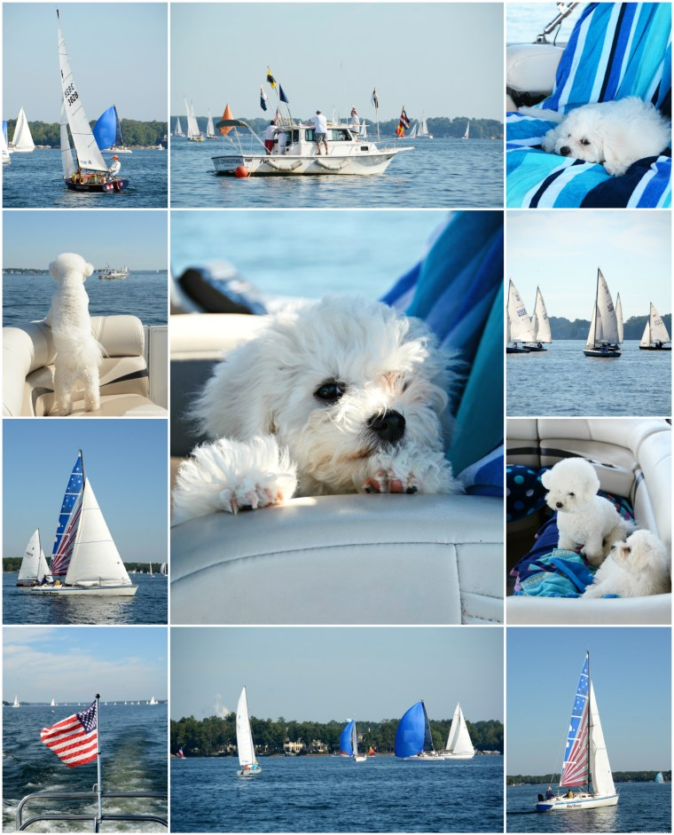 Boating with Dogs and Sailboat Regatta Lake Norman | ©homeiswheretheboatis.net #lake #dogs #bichonfrise