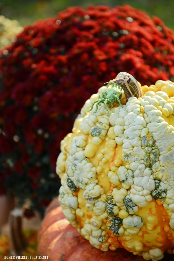 Pumpkins and mums with spider   ©homeiswheretheboatis.net #halloween #tablescapes #alfresco #lake