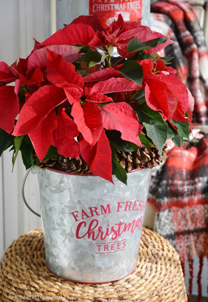Farm Fresh Christmas Trees galvanized bucket with poinsettia and pine cones | ©homeiswheretheboatis.net #christmas #porch