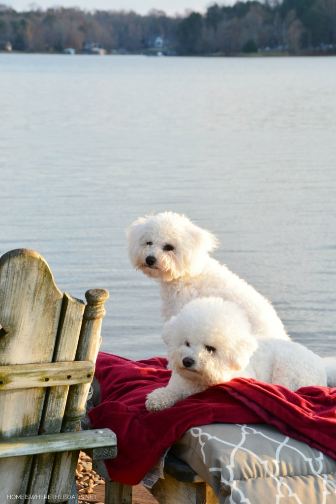 Lola and Sophie | ©homeiswheretheboatis.net #bichonfrise #dogs #LKN