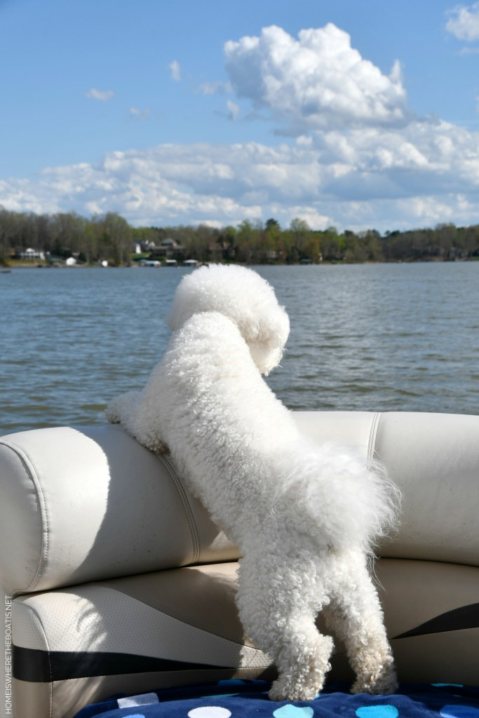 Weekend Waterview Boating with dogs Lake Norman | ©homeiswheretheboatis.net #LKN #dogs #pontoon #bichonfrise