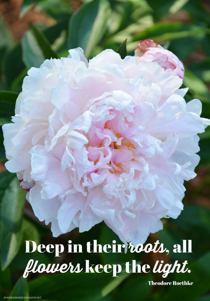 """Deep in their roots, all flowers keep the light."" - Theodore Roethke"