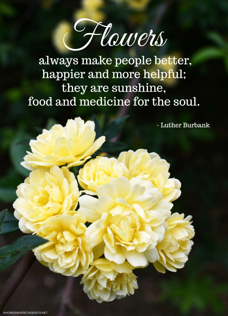 """Flowers always make people better, happier and more helpful; they are sunshine, food and medicine for the soul."" - Luther Burbank"