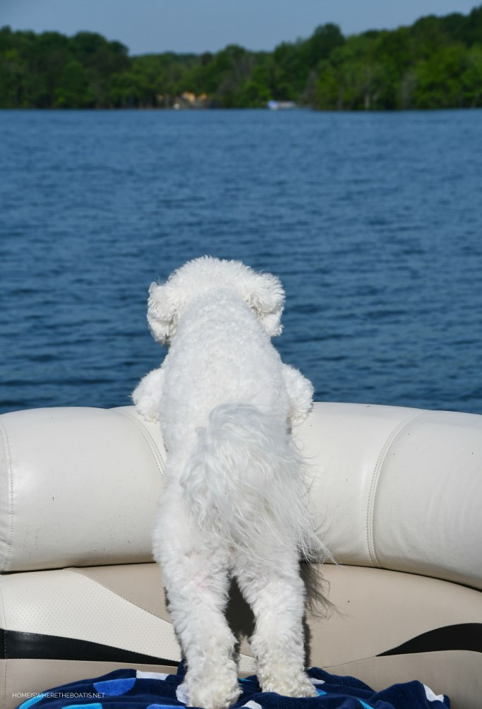 Boating with dogs | ©homeiswheretheboatis.net #lake #bichonfrise