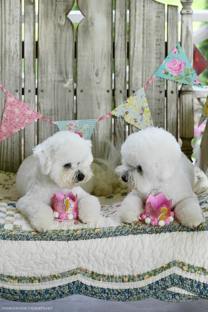 Sophie and Lola celebrate birthdays | ©homeiswheretheboatis.net #dog #bichonfrise