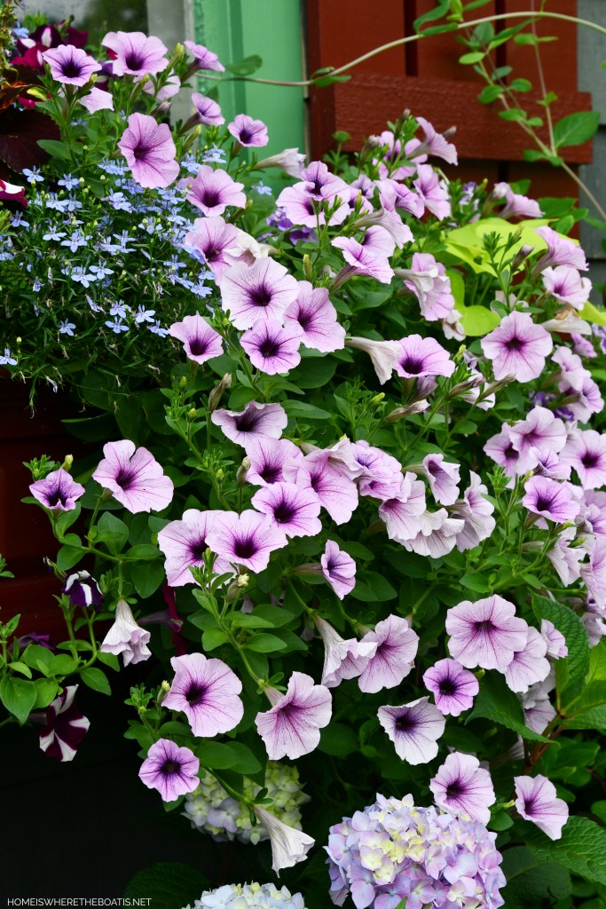 Window boxes with petunias by Potting Shed | ©homeiswheretheboatis.net #flowers #garden #hydrangeas #windowboxes