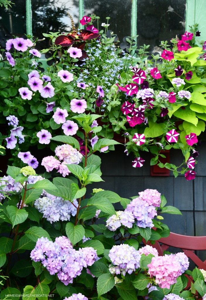 Window boxes with petunias, lobeila, coleus and sweet potato vine by Potting Shed | ©homeiswheretheboatis.net #flowers #garden #hydrangeas #windowboxes