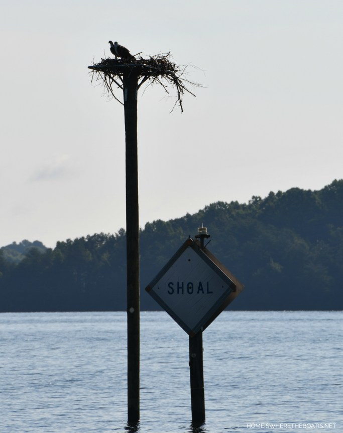 Osprey nest on platform | ©homeiswheretheboatis.net #lake