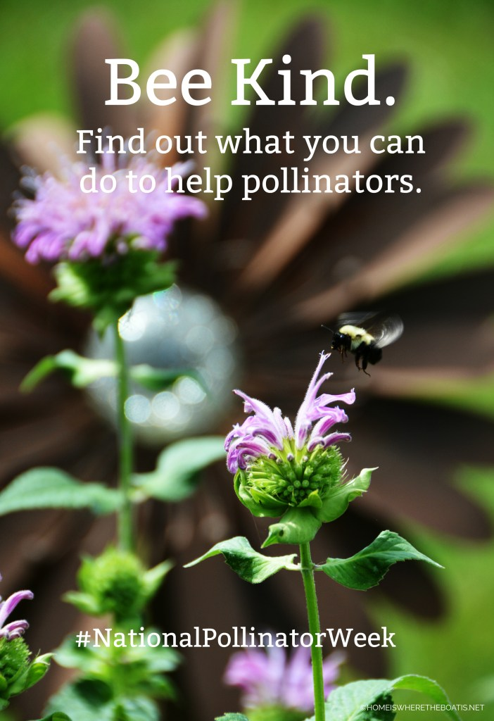Bee Kind and Help Our Pollinators | ©homeiswheretheboatis.net #nationalpollinatorweek #bees